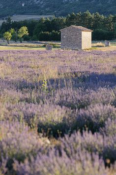 Sault, Provence