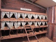 This is so cute!!!  Top 10 Chicken Nesting Boxes