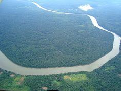 Just Go #JustGo - Sanderlei: Fauna e Flora Amazônica - Manaus - Amazonas AM - Brasil