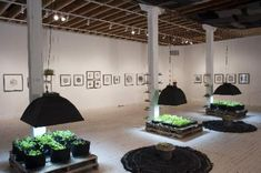 """The front gallery of the Boulder Museum of Contemporary Art houses a live garden, part of the exhibition """"Edible?,"""" featuring food-related work"""
