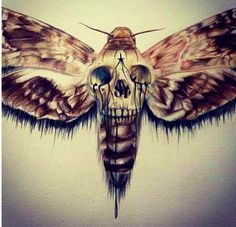 This moth would make a good tattoo