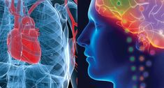 Second Brain Found in  Heart Neurons - Trust your Gut Feelings