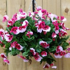 Pretty pink pansy artificial hanging basket - The Artificial Flowers Company Artificial Hanging Baskets, Artificial Topiary, Hanging Flower Baskets, Artificial Plants, Fake Plants, Silk Roses, Silk Flowers, Topiary Plants, Flower Meanings
