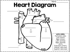 16 circulatory system drawing kids . Free cliparts that