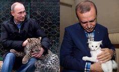 ειδησεις: Stratfor: Δεν θα υπάρξει κλιμάκωση των σχέσεων Ρωσίας - Τουρκίας Cats, Blog, Animals, Gatos, Animales, Animaux, Animais, Kitty, Cat