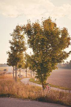 I Lilla Kamomillas Villa Seasonal Celebration, Garden Park, My Point Of View, Baltic Sea, Fields, Pond, Villa, Country Roads, Nirvana
