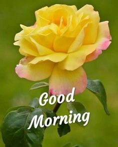 Good Morning Gif Images, Beautiful Morning Quotes, Good Morning Wishes Quotes, Good Morning Dear Friend, Beautiful Good Night Images, Good Night I Love You, Morning Greetings Quotes, Good Morning Picture, Good Morning Messages