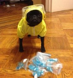 Breaking Bad Dog Cosplay