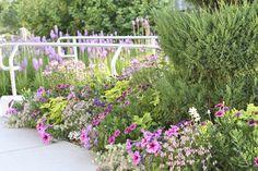 Designer: VW Garden: Spokane Temple Annual Flowers, Salvia, Petunias, Perennials, Landscape Design, Floral Design, Flowers Garden, Violets, Landscaping