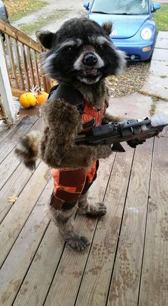 "Christina Borchardt, a talented artist who makes costumes for various cosplay events, created an incredibly realistic ""Rocket Raccoon"" from Guardians of the Galaxy costume for her (now)…"