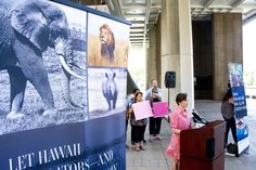 CRAIG T. KOJIMA / CKOJIMA@STARADVERTISER.COM                                 Speakers at a news conference released results of an investigative report on Hawaii's online trade in ivory and other wildlife products. Sara Marinello of the Wildlife Conservation Society, pictured, spoke in support of a ban on the Hawaii-based trade. Other speakers included actress Kristin Bauer van Straten and Jeff Flocken of the International Fund for Animal Welfare.