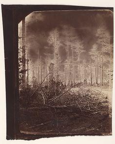 Alexander Gardner  The Wilderness Battlefield