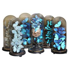 Set of 19th Century Century Glass Domes With Collections | From a unique collection of antique and modern animal sculptures at http://www.1stdibs.com/furniture/more-furniture-collectibles/animal-sculptures/