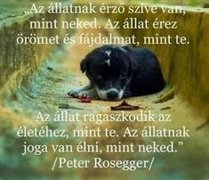 Peter Rosegger, Word 2, Dog Quotes, Beagle, Dog Love, Dogs And Puppies, Labrador, Pets, Tao