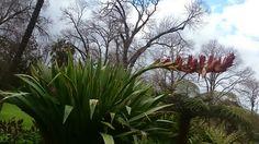 Victoria garden...