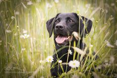 Blackie by tdkherskind #animals #animal #pet #pets #animales #animallovers #photooftheday #amazing #picoftheday