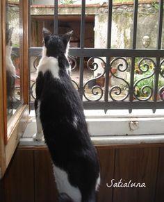 blog di Sara: alla finestra