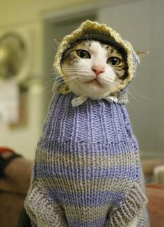 gato com roupa de inverno