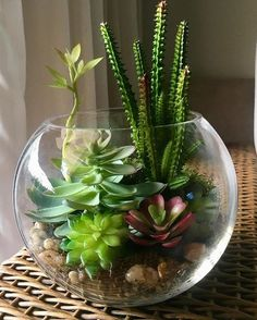 succulents mason jar, succulents centerpiece, succulents indoor, succulents in containers