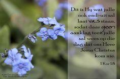 Dag 81 Bybelvers: 1 Kor 1:8 Dit is Hy wat julle ook end-uit sal laat vas staan, sodat daar geen aanklag teen julle sal wees op die dag dat ons Here Jesus Christus kom nie.