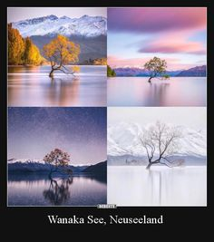 Wanaka New Zealand, Lake Wanaka, Types Of Humor, Kindergarten First Day, One Word Art, R Image, R Dogs, Time Of The Year, You Are The Father