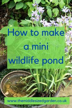 Make a mini wildlife pond, ideal for small gardens. Ideas, plants and great DIY explanations Landscape Design Small, Small Garden Landscape, Pond Design, Small Garden Design, Garden Modern, Modern Gardens, Easy Garden, Fence Garden, Garden Water