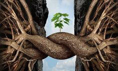 Resiliencia: regresa a tu estado natural