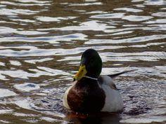Veeblogi fb.me/veeblogi Bird, Search, Animals, Animales, Animaux, Birds, Searching, Animal, Animais