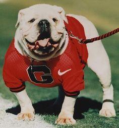 Georgia bulldogs!!