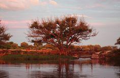 View of the Old Bridge at sunset  Maun, Botswana