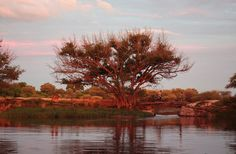 View of the Old Bridge at sunset  Maun, Botswana