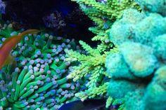 Jūrinis akvariumas Lps