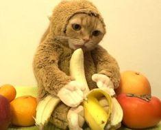 catdressedmonkey