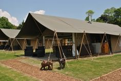 Safari tents at a wild animal park in Kent - an African safari in disguise!  (And without the expense and long haul flights).....