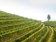 """If you're planning a trip to Venice, make a detour to this northeastern Italian region—in particular to the wine areas of Isonzo, Carso, and Collio. The food and wine scenes here are dynamic and exciting, with a great generation of young winemakers taking over older domains and putting a new spin on traditional wines. """"This small region produces fantastic whites and reds,"""" says Grant Reynolds, wine director at Charlie Bird and Pasquale Jones in New York City. """"Friulano [once known as Tocai…"""