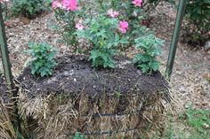 How to make a straw bale garden  By Sara Welch -  February 28, 2017