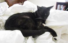 Friday Cat Blogging - 7 September 2012