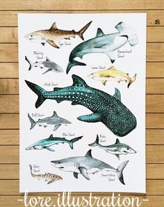 Sharks Poster by my wife - pens and watercolor, A3 - Imgur