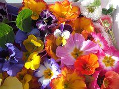Edible flowers list. List of edible flowers. Which edible flowers can you eat in the UK. List of edible flowers available from www.maddocksfarmorganic.co.uk
