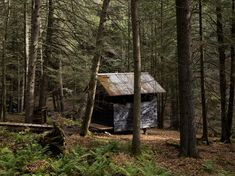 Sauna built by the Beaver Brook School, clad with pine boards, coated with pine tar, roofed with steel. Photo by Noah Kalina.