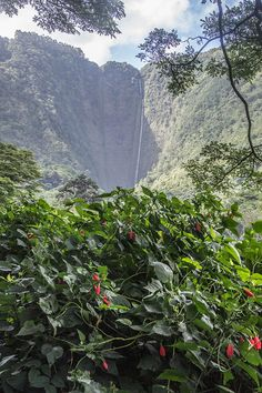 7 Wonders Of Hawaii's Waipio Valley That Will Take Your Breath Away | Hawaii's Tallest Waterfall