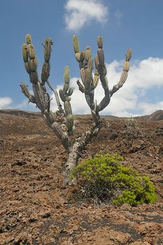 Cactus Flower, Display, Plants, Floor Space, Billboard, Plant, Planets