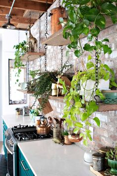"""The kitchen shelves were going to be mounted on the wall, but because of the brick, """"It was much safer to hang them from the ceiling, and I actually like the design better,"""" says Erin. Boho Kitchen, Green Kitchen, Kitchen Decor, Ceiling Shelves, Ceiling Hanging, Hang Plants From Ceiling, Brick Shelves, House Ceiling, Wooden Shelves"""