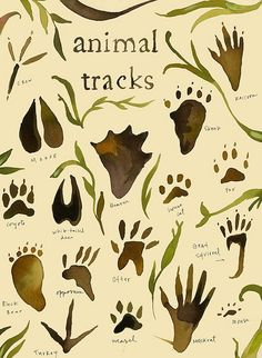 Animal tracks! Good to know when you're hiking, backpacking or camping #Camping