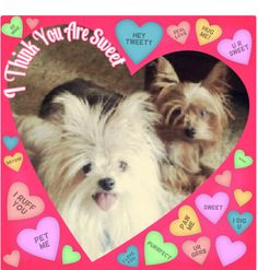 Little friends #Valentine #Dogs where can you buy pet protector online ?https://www.youtube.com/watch?v=oYq2GffOZsc