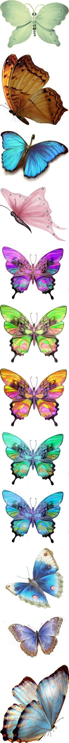 Butterflies with potential!: