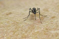 """Embarazada con Zika se mantiene """"controlada"""" en hospital de Heredia"""