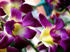 tropical flowers - tropical flowers for sale -tropical flowers delivery