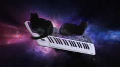 CATS ON SYNTHESIZERS IN SPACE