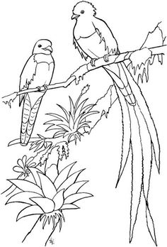 The Most Beautiful Quetzal Bird Coloring Pages with Colorful Plumage - Coloring Pages Bird Coloring Pages, Printable Coloring Pages, Free Coloring, Coloring Pages For Kids, Coloring Sheets, Coloring Books, Line Drawing, Painting & Drawing, Zentangle